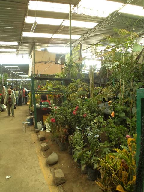 Alternativa ecol gica donde puedo comprar plantas for Donde venden plantas