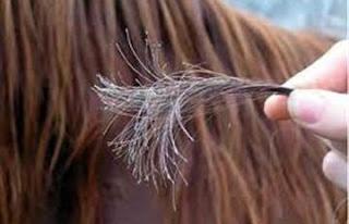 خبيرة تجميل : البيض والمايونيز لعلاج تقصف الشعر - اطرف نهايات الشعر