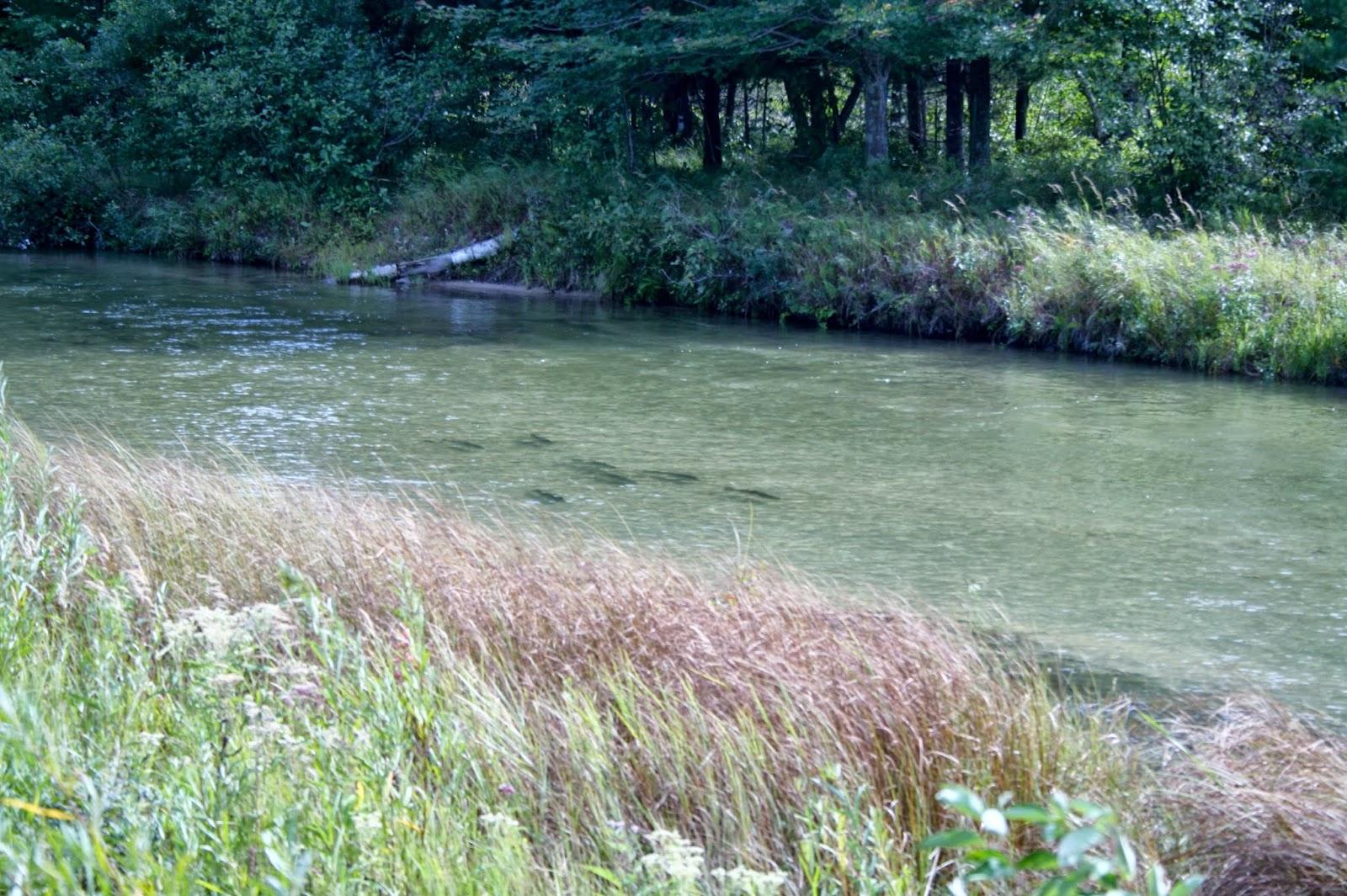 Joe diane mallery 39 s big adventure modern day gypsies for Platte river michigan fishing