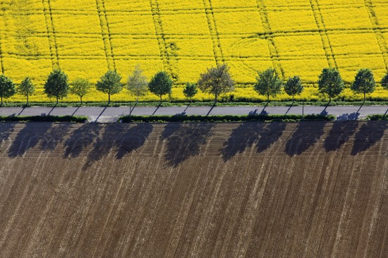 Aerial view of a row of trees