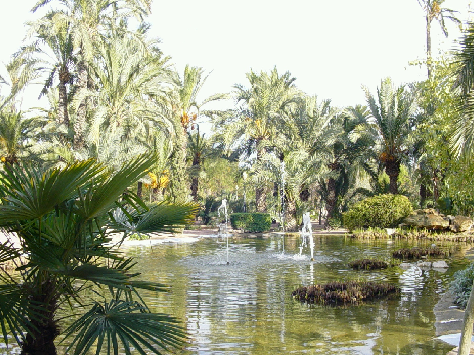 Elche Spain  city images : ... visit to Elche and to the 'Huerto del Cura' in particular. Magic