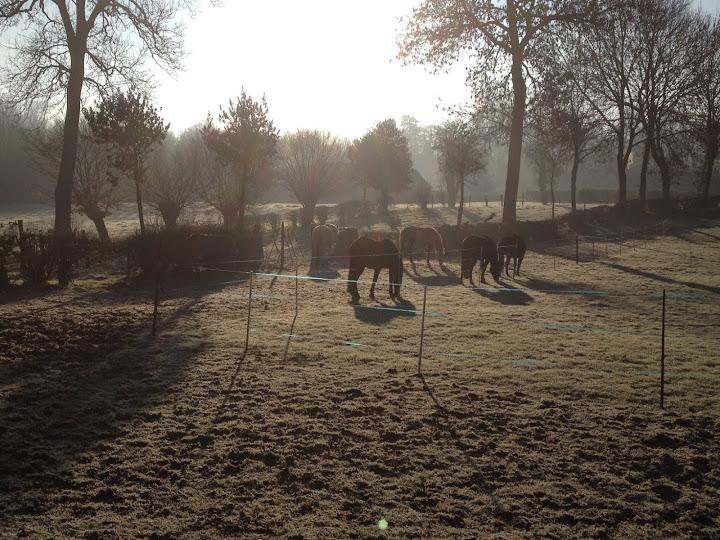 Un matin de janvier à Assocheval