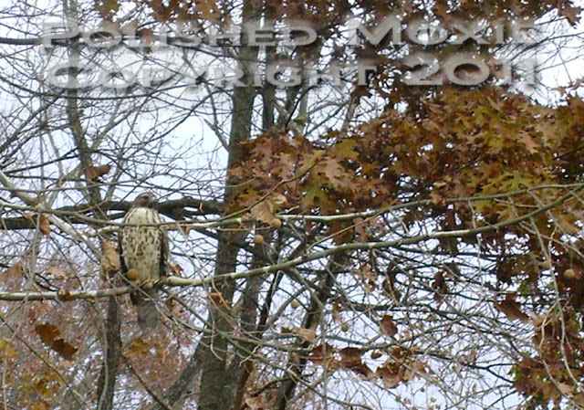 Picture zoomed on hawk sitting on tree branch.