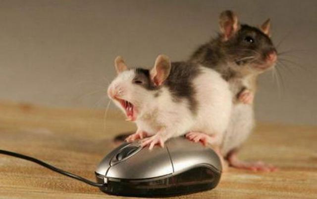 Poca vergonhaa, nem o mouse escapa
