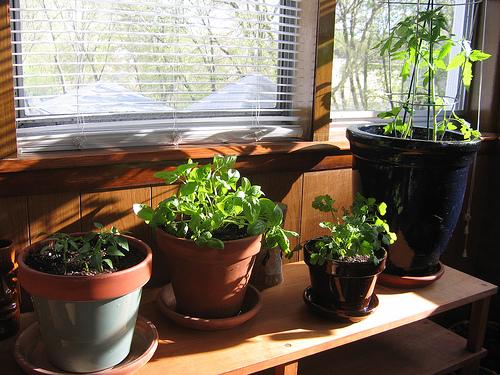 Mayo 2012 huerto hogar for Indoor vegetable gardening beginner