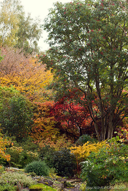 colourful autumn colours below the rowan tree