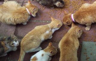 les sept chats
