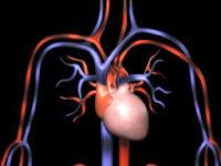 Obat Inflamasi Jantung Herbal