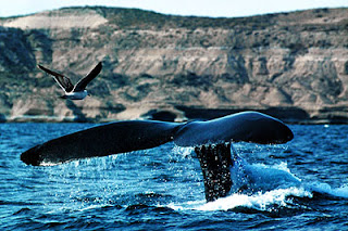 Whale Watching tour in Argentina