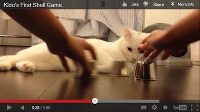 Kido si kucing yang mahir main tebak-tebakan