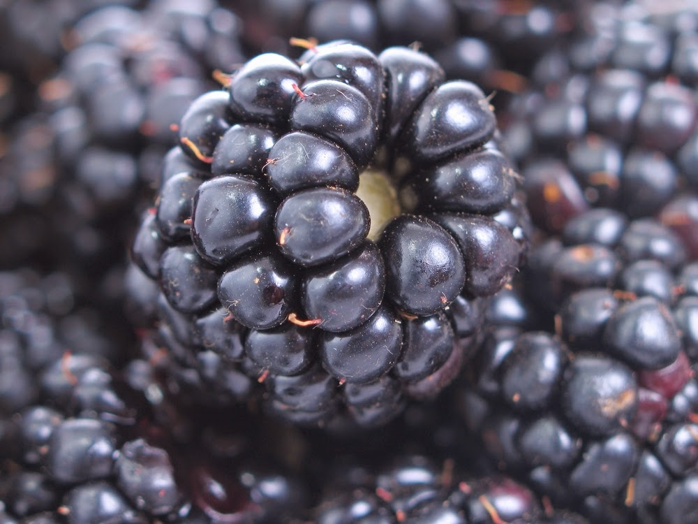 Blackberries and other dark berries are a good source of fiber
