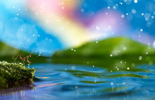 Alam Fantasi Nadav Bagim 11 Foto