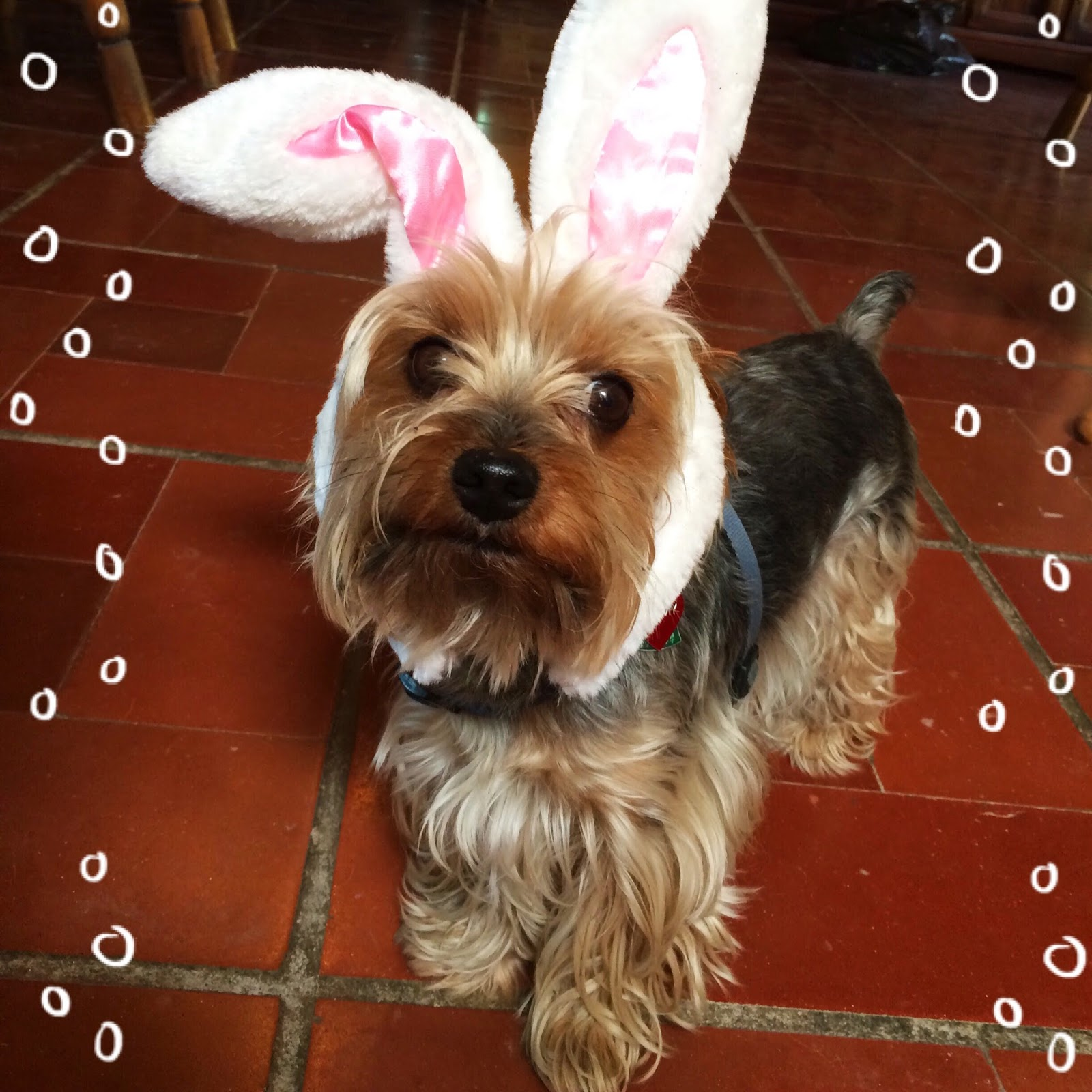 Cutest Easter Bunny Ever!