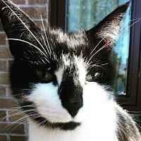Punk Bob (le chat de Woodstock et Sharon) est un chat noir et blanc à poils courts avec de très longs et jolis cils et des oreilles pointues