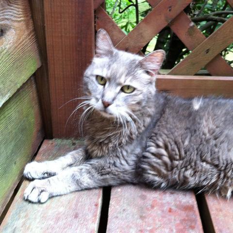 Maggie, Susan's cat