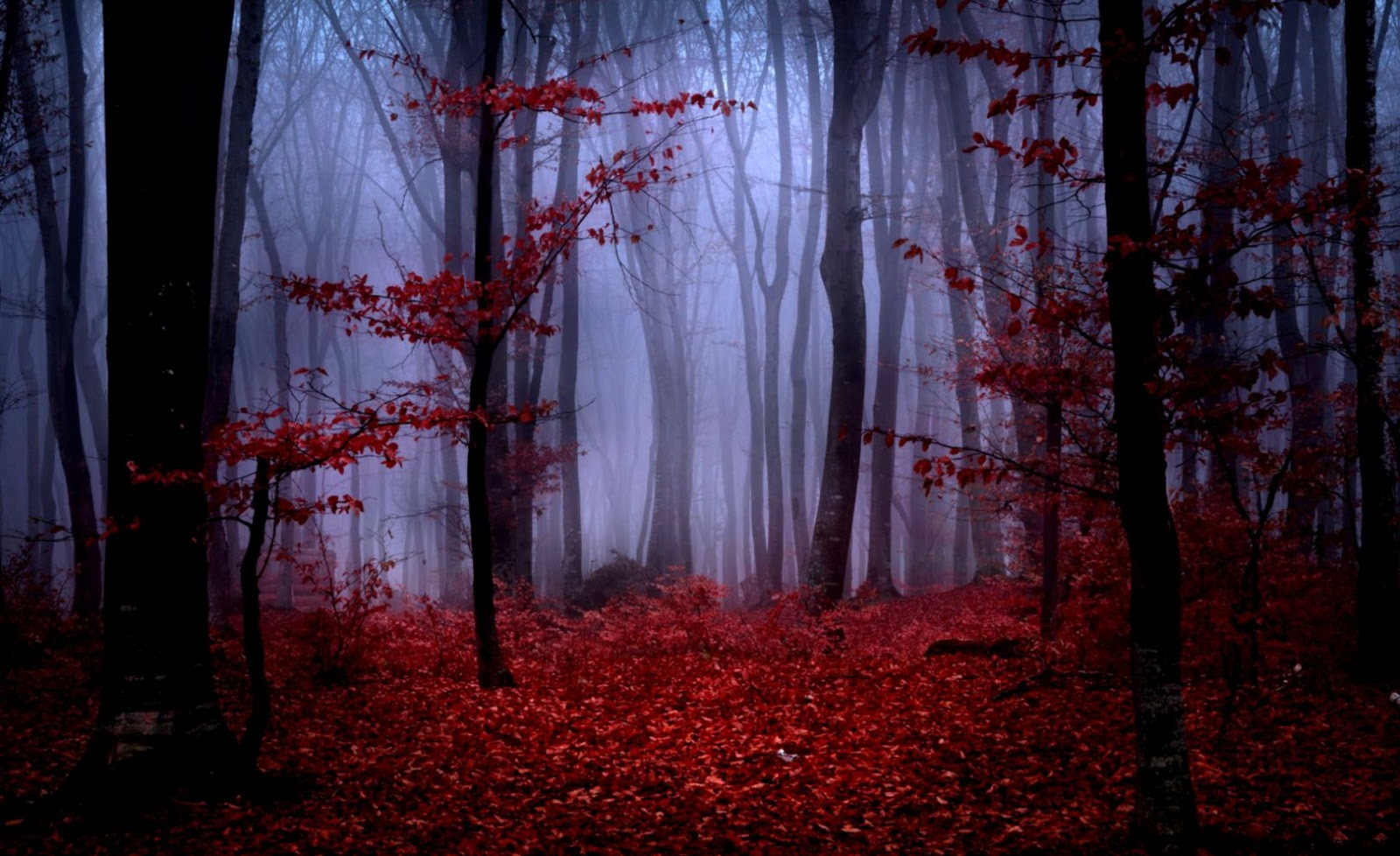 Autumn red forest 1627749