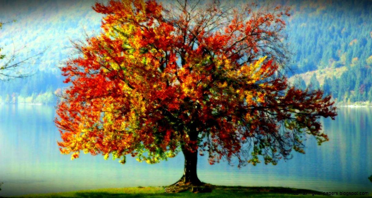 Autumn Tree on the original oil painting   Art Wallpapers   Hi