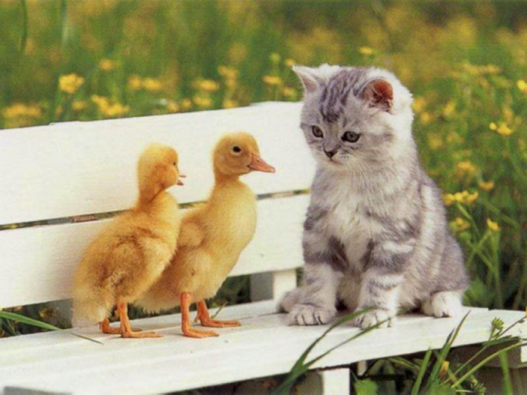 Cute lovely pics very cute cat with two unusual friends voltagebd Gallery