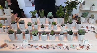 Festivalet - Pompilio Plants
