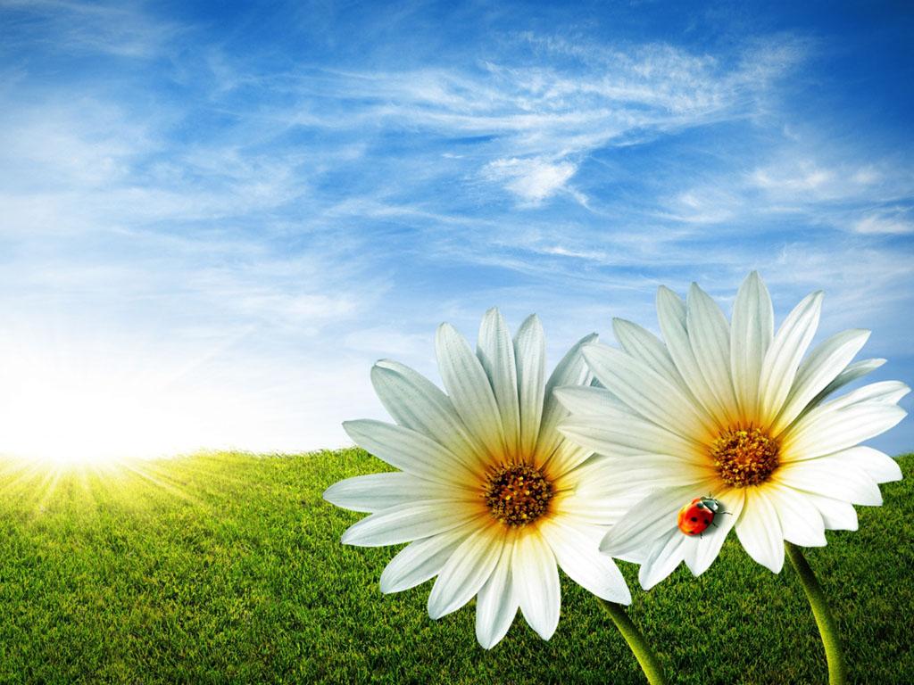 Wallpaper Bunga-Bunga Cantik Terbaru
