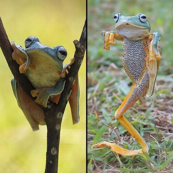 Funny animals of the week - 26 June 2015, animal photo, funny animal, cute animals