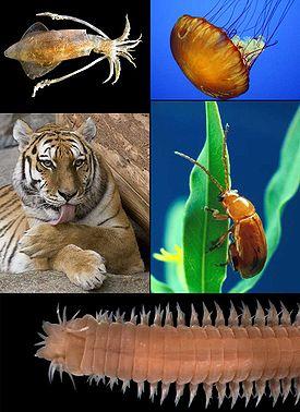 картинки смешные животные, лучшие приколы с