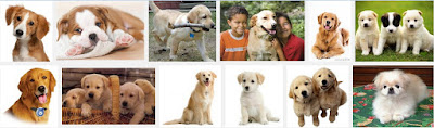 https://www.google.com/search?q=dog+pet&source=lnms&tbm=isch&sa=X&ved=0CAcQ_AUoAWoVChMI1_KU2pCtyAIVRFwaCh3FdAnr&biw=1366&bih=667