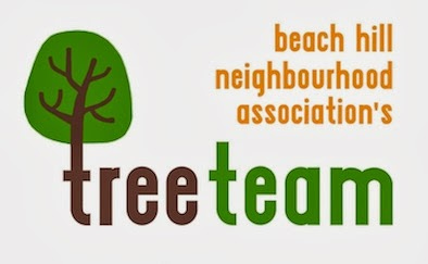 Tree Team Beach Hill