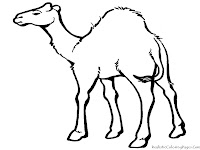 Camel Desert Animal Coloring Sheets