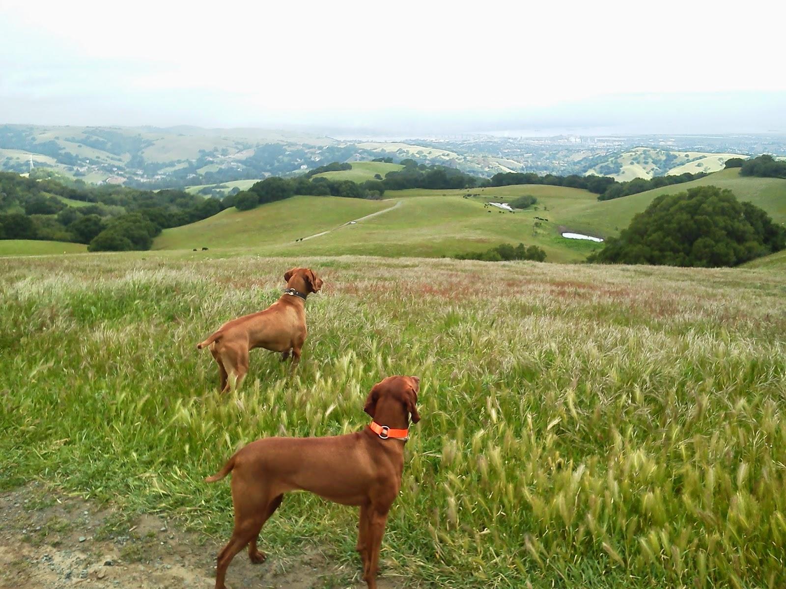 Redbirddog a hungarian pointer vizsla blog the road less traveled the road less traveled sciox Choice Image