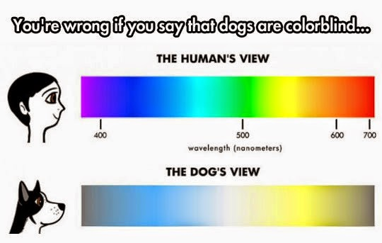 Some Interesting Facts About Dog's View