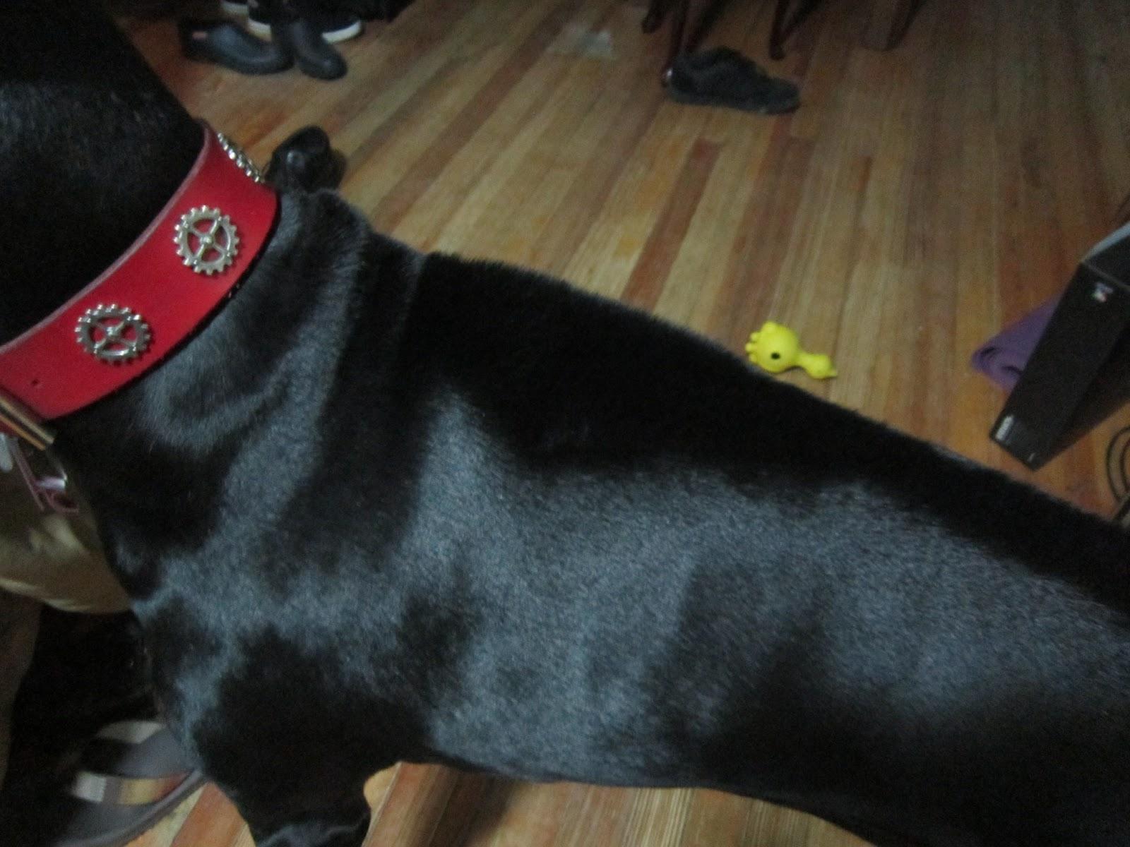 Door Protector Dog >> The Elka Almanac: Canine Body Language: Piloerection