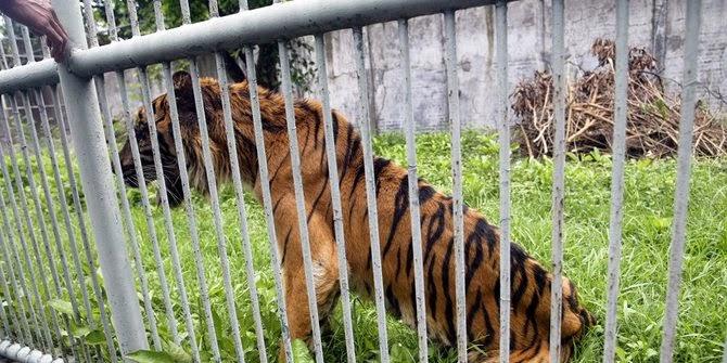 Kematian hewan di Kebun Binatang Surabaya