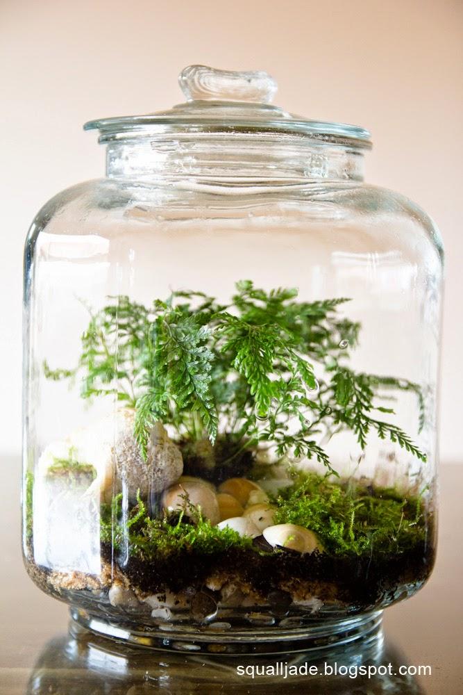Large closed terrarium with hare's foot fern and assorted mosses - Ulysses: Terrarium Tutorial