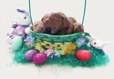 Look what the Easter Bunny brought!