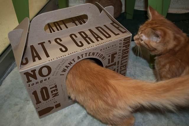 kucing beratur masuk dalam kotak