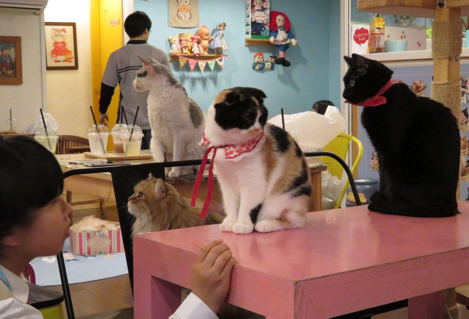 Cat Cafe, Seoul
