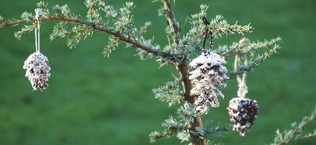 Kogler som naturligt julepynt i haven