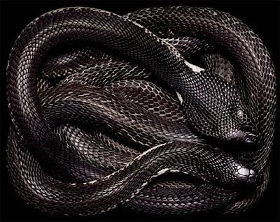 ular-pembunuh