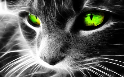 Green Cat Eyes Wallpaper