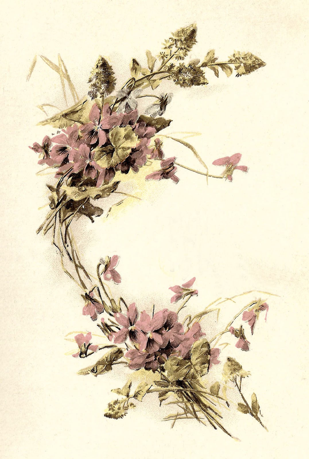 Antique Images Free Flower Graphic Vintage Forget Me Not Flower Clip Art On Book Cover