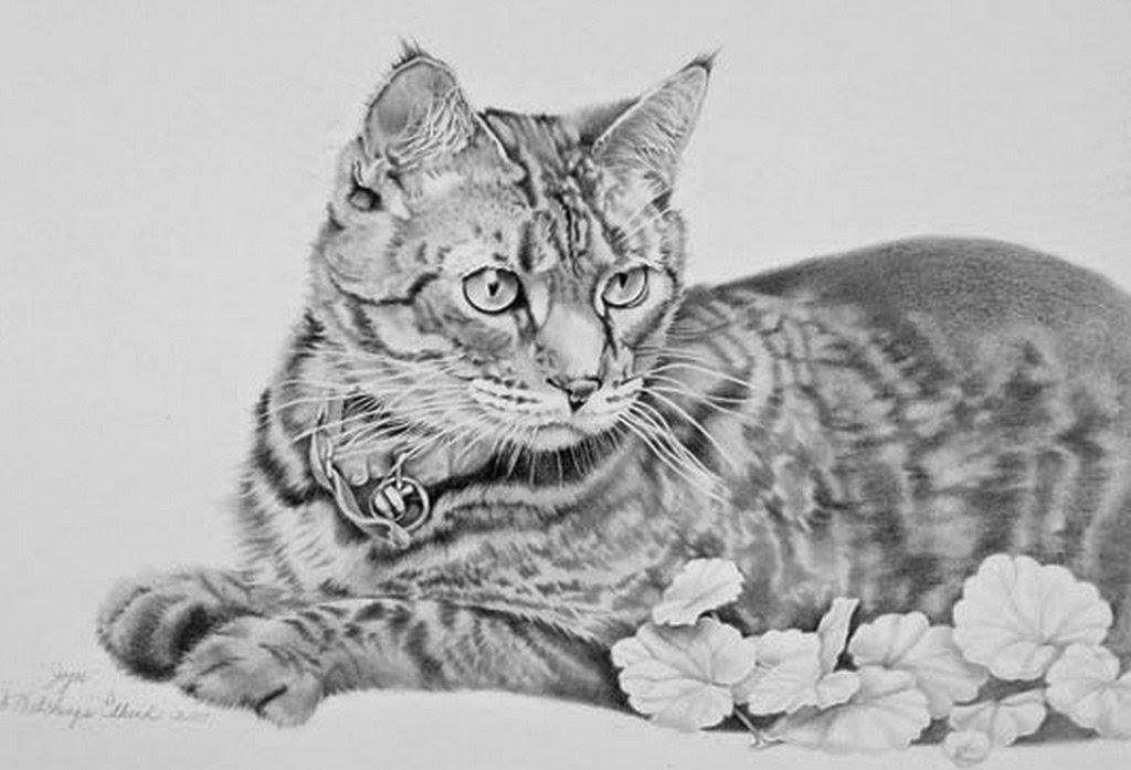 Paisajes y Bodegones: Cuadros, Dibujos de Gatos Hechos a Mano