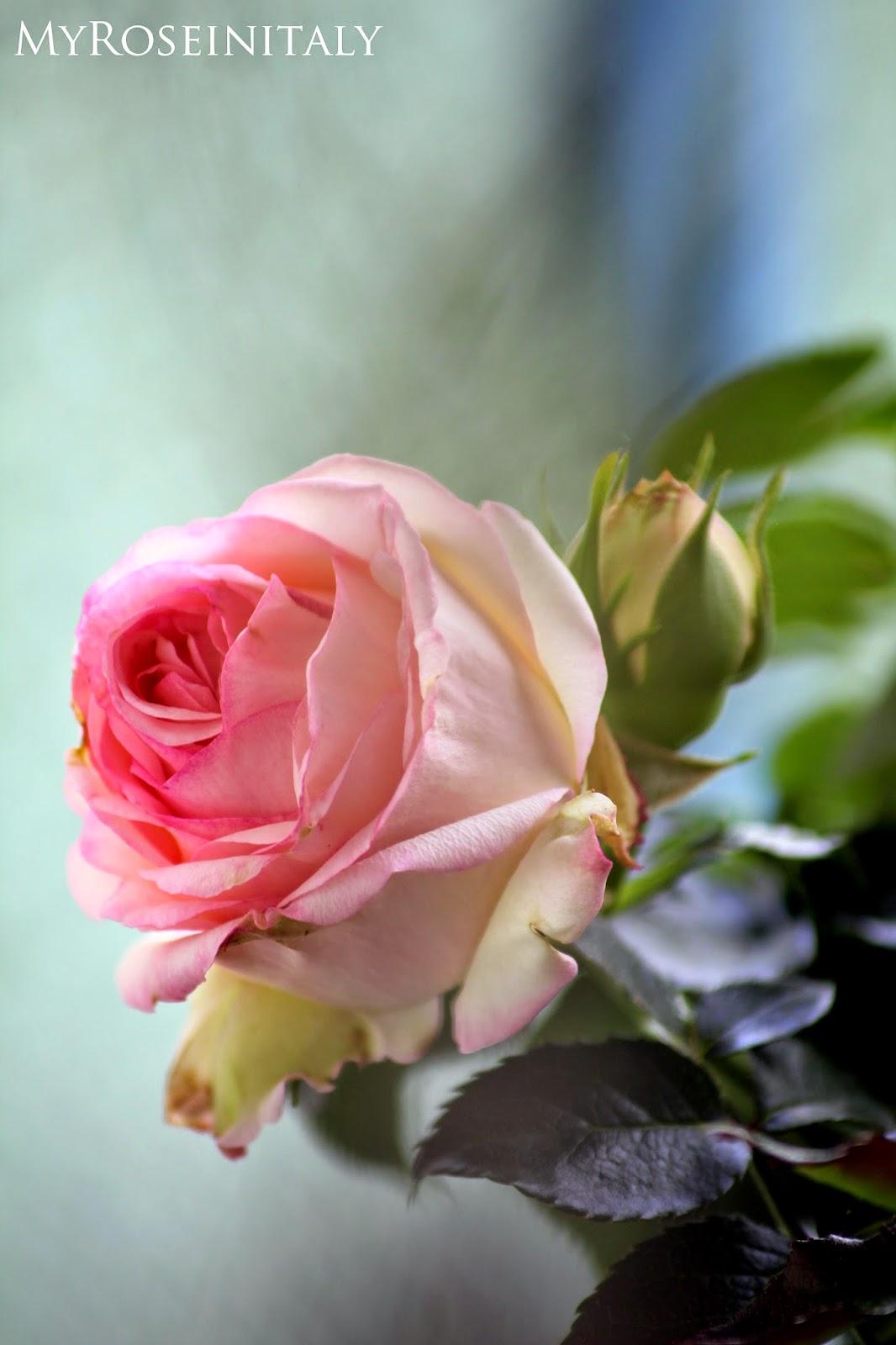 Trovo Che Le Rose Spontanee Siano Molto Più Belle