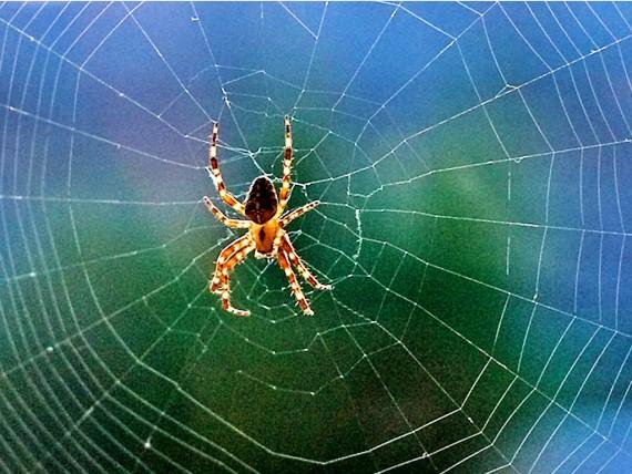 Паутина и паук