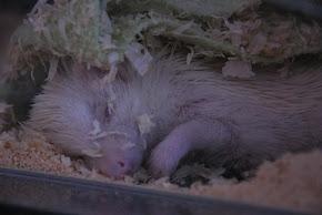 Śpiąca Nina