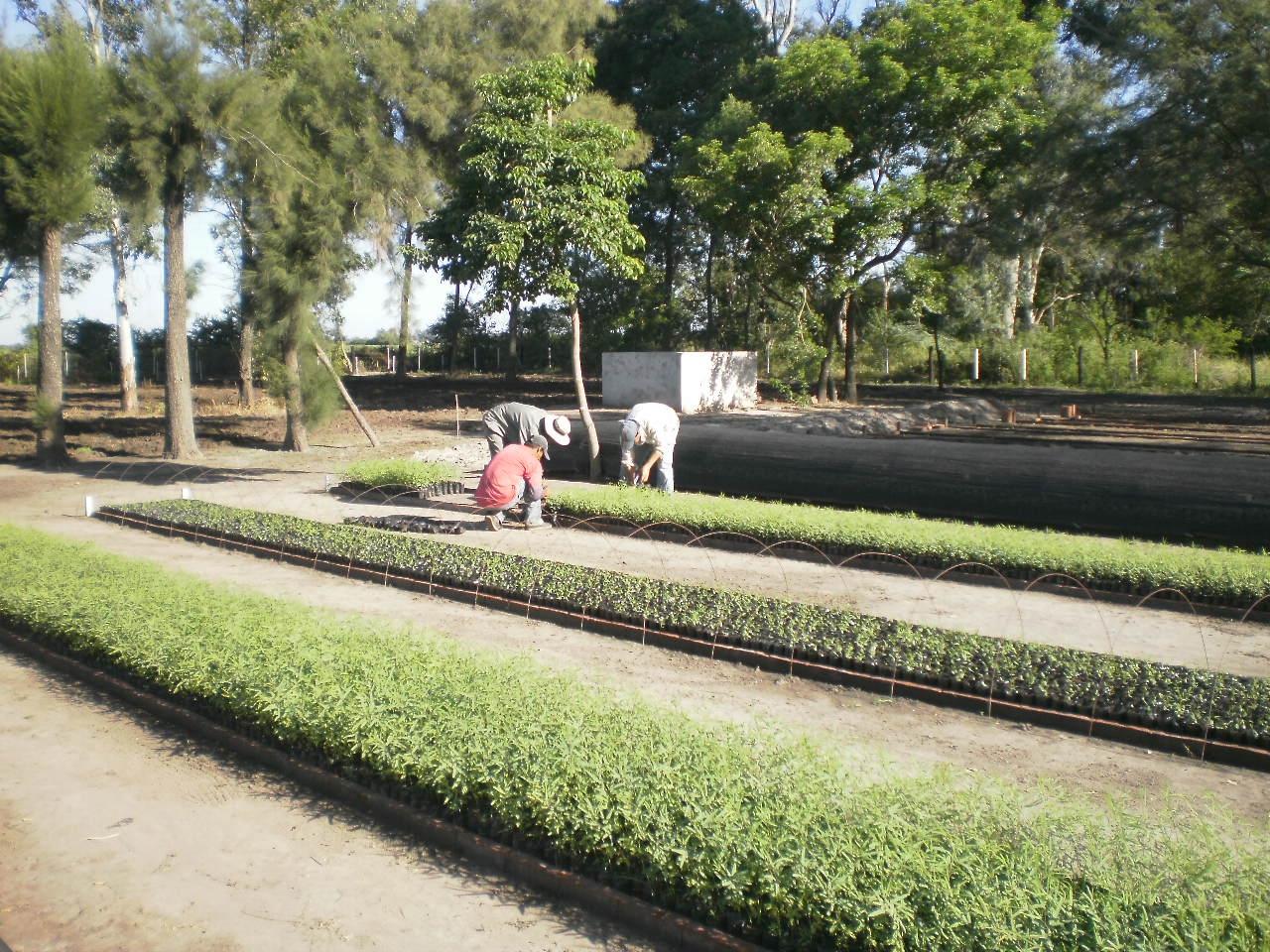 M s avances en el vivero forestal san bernardo for Fabricacion de viveros