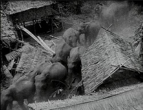 http://3.bp.blogspot.com/-EDTkYYt1lsI/Ub-qtuYY8wI/AAAAAAAAAaU/wLTakaE-KOg/s1600/elephant-stampede-from-chang-1927.jpg