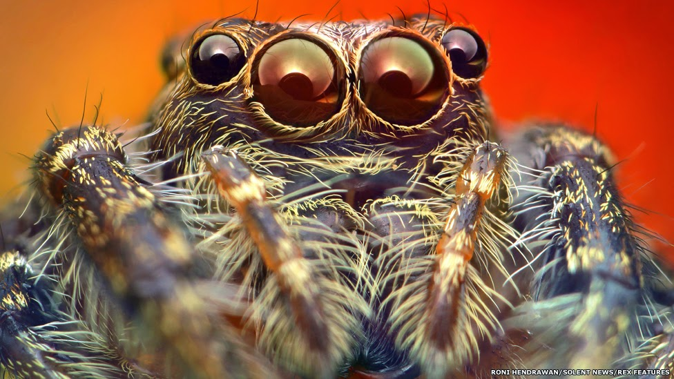 Incredible close-up of Colorful Spiders