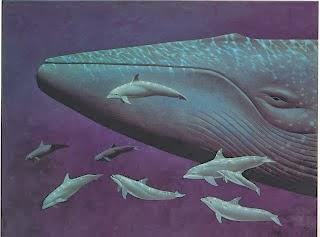 Gambar Ikan Paus Binatang Paling Besar Di Dunia