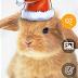 تطبيق Camera Magic Pro للتصوير الإحترافي وتحسين وتحرير الصور لويندوز فون ونوكيا لوميا xap